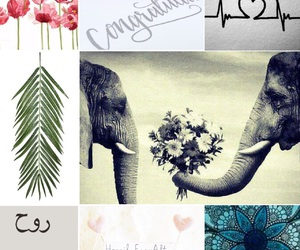 anniversary, elephants, and Collage image