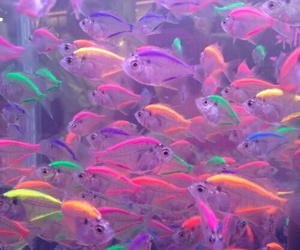 fish, neon, and colors image