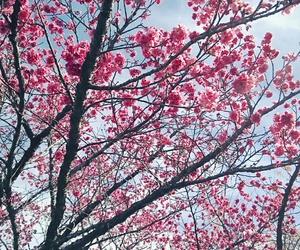 beautiful, brazil, and flowers image