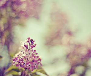 bokeh, flowers, and photography image