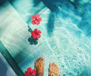 summer, flowers, and pool image