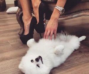 dog, cute, and luxury image