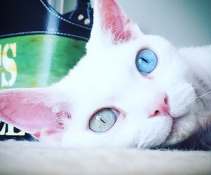 cat, eyes, and kitty image