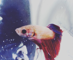 aesthetic, betta, and black image