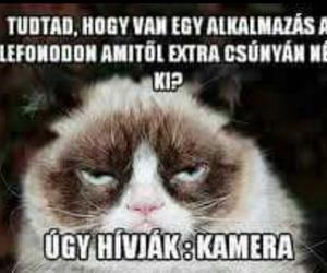 grumpy cat, magyar, and vicces image