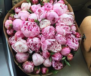 flowers, Hot, and pink image