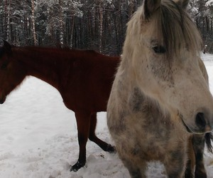 neige, cheval, and chevaux image