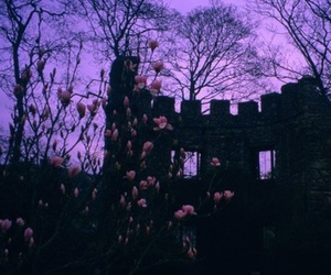 purple, flowers, and sky image