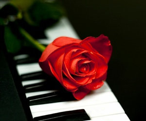 rose, red, and piano image