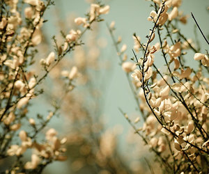 84 Images About Ou Vont Les Fleurs On We Heart It See More About
