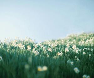 fantastic, floral, and flower image