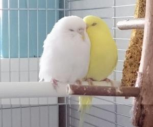 gelb, süß, and vögel image