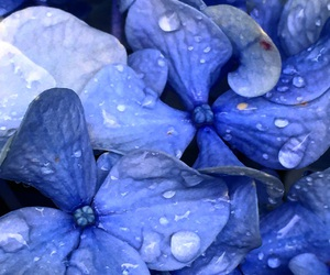 flowers, water droplets, and countrylife image