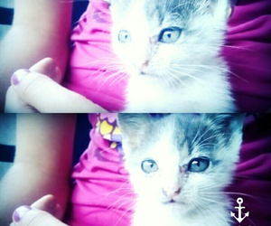 blue eyes, so cutee, and kitty image