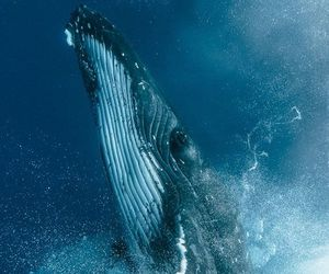 ocean, whale, and animals image
