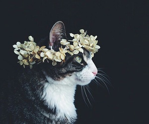 cat, lovely, and tumblr image