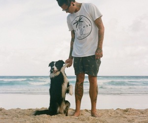 border collie, dog, and the amity affliction image