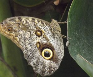 animal, butterfly, and green image