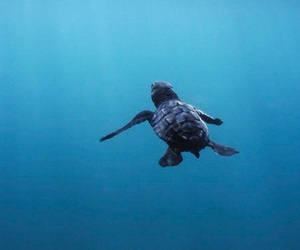 turtle, blue, and sea image