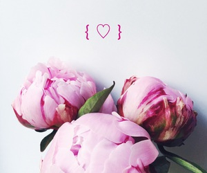 flowers, heart, and peonies image