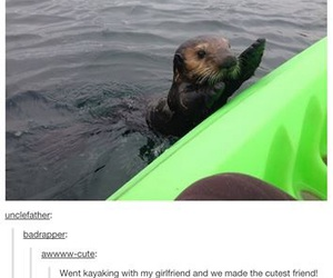 funny, adorable, and animal image