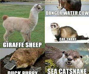 animals and funny image