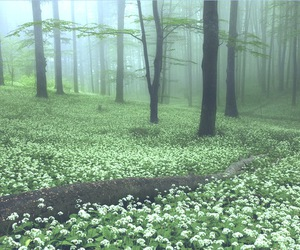 forest, nature, and flowers image
