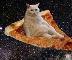 pizza, cat, and space image