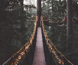beautiful, woods, and cool image