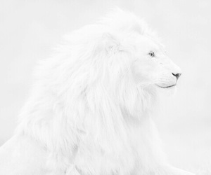 lion, pure, and tumblr image