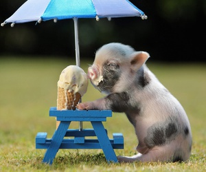 ice cream, piglet, and cute image