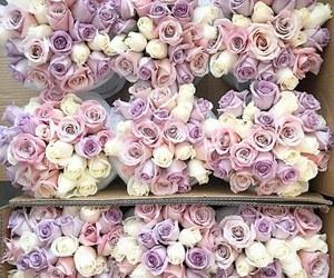 flowers, rose, and amazing image