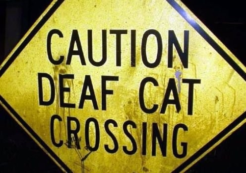 cat, funny, and sign image