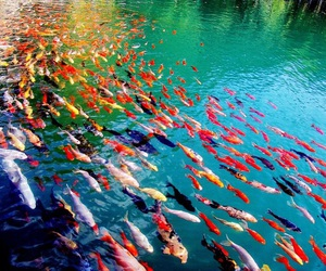 fish, colors, and water image