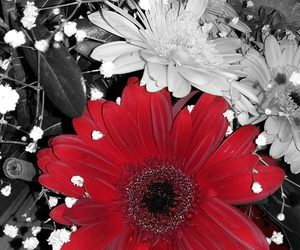 beautiful, pic, and red image