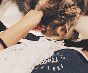 cat, katt, and love image
