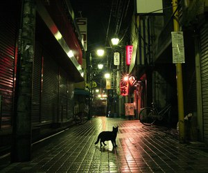 cat, night, and light image