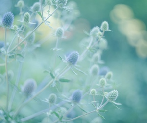 plants, aesthetic, and nature image