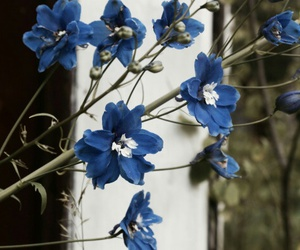 blue, lovely, and flowers image