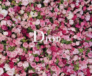 dior, flowers, and pink image