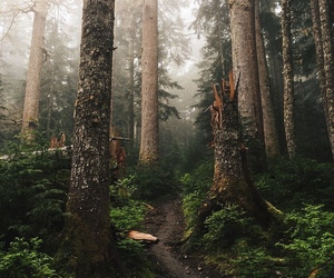 forest, tree, and aesthetic image