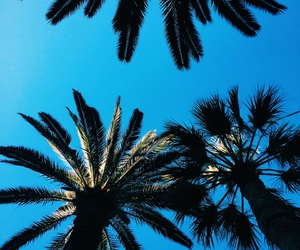 palm and summer image