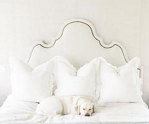 bedroom, cream, and dog image