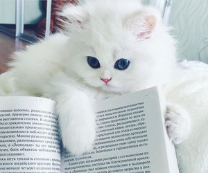cat, white, and book image