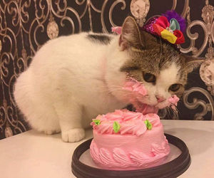 cat, cake, and animal image