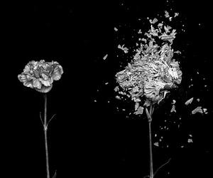 branco, cravo, and preto image