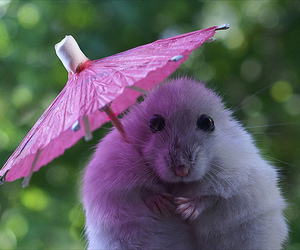 cute, animal, and umbrella image