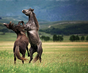 horse and stallion image