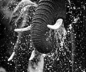 elephant, water, and animal image
