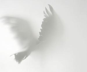 bird, fog, and crow image